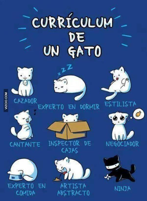Currículum de un gato