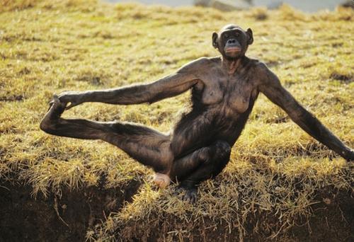 Animales haciendo Yoga - Humor - 16