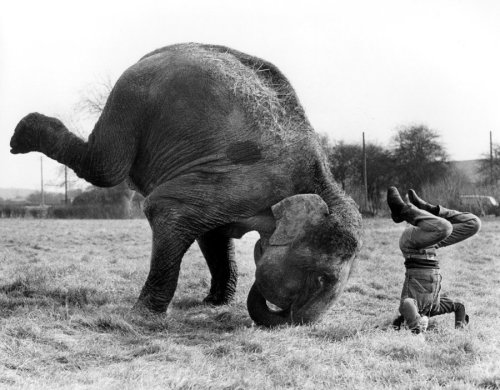 Animales haciendo Yoga - Humor - 8