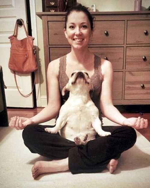 Animales haciendo Yoga - Humor - 9